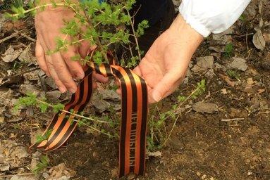Положение О эколого-патриотическом проекте «Лес Победы»